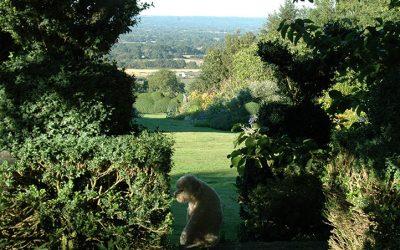 The garden is open